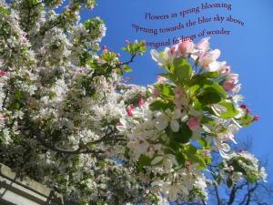 flowers opening 2