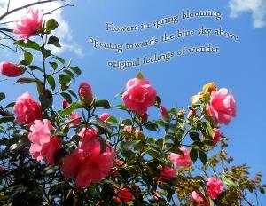 flowers opening