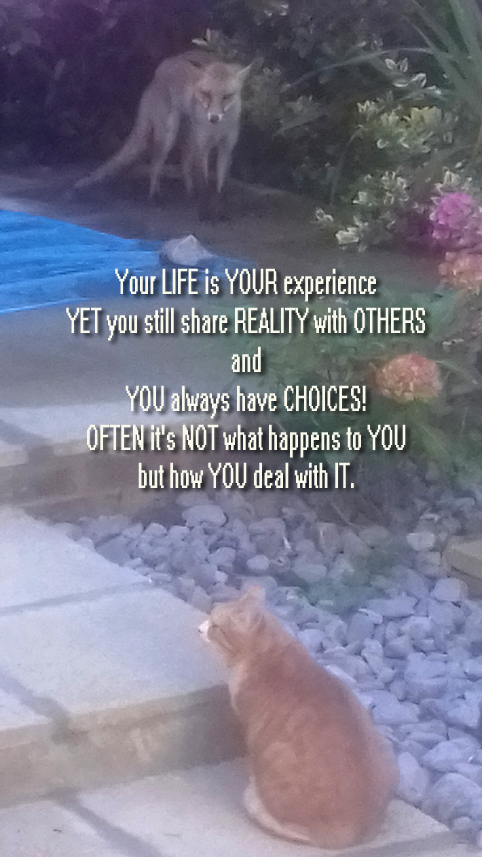 FOX & CAT copy